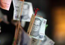 thaimaalainen rahapuu