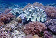Pattaya sukellus Thaimaa