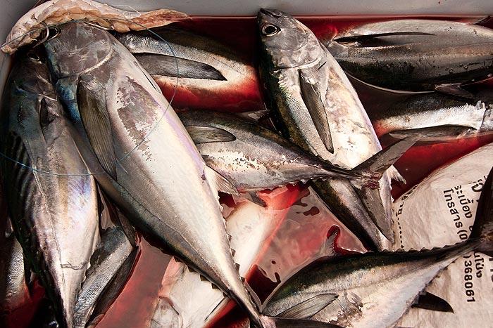 Phuket kalastus Thaimaa
