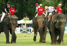 Elefantti polo Thaimaa
