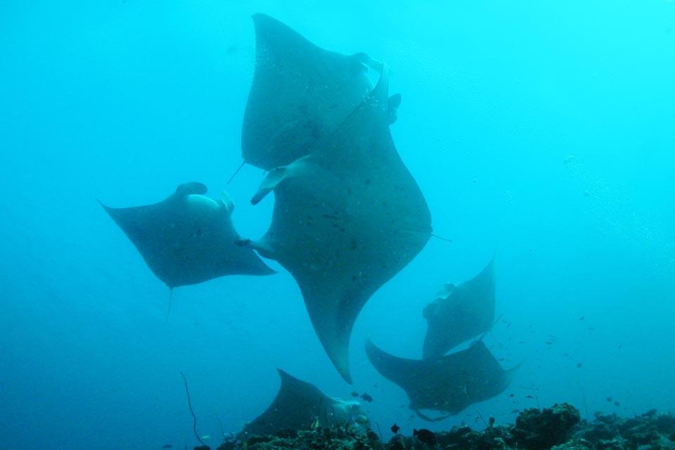 malediivit sukellus