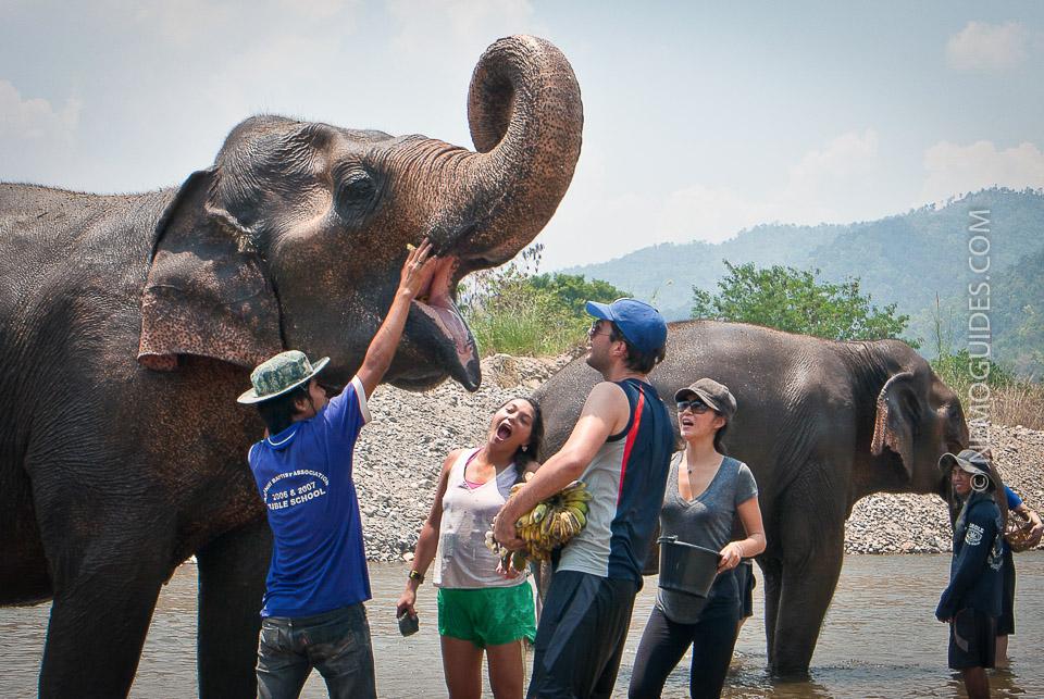 thaimaa paras norsuleiri