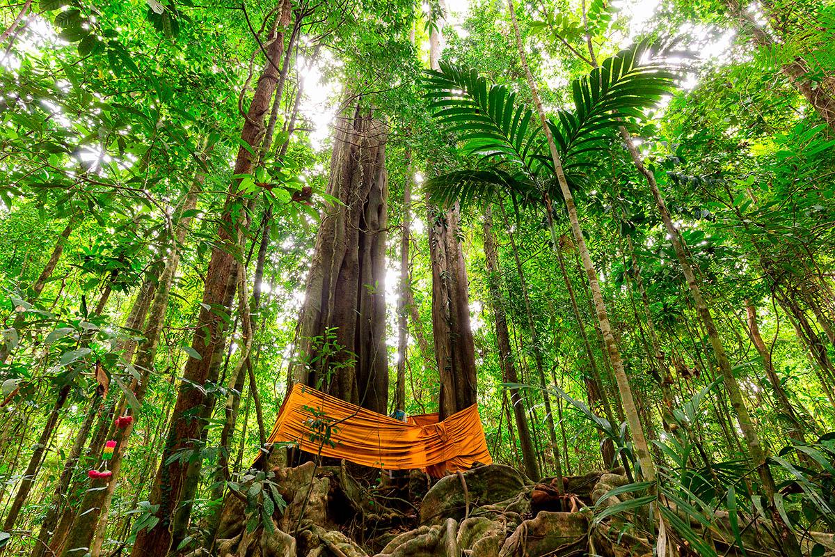 thaimaa koh kood viidakko sademetsä