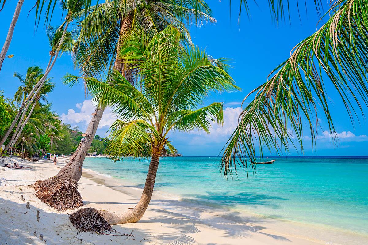 thaimaa phangan haad yao ranta palmu