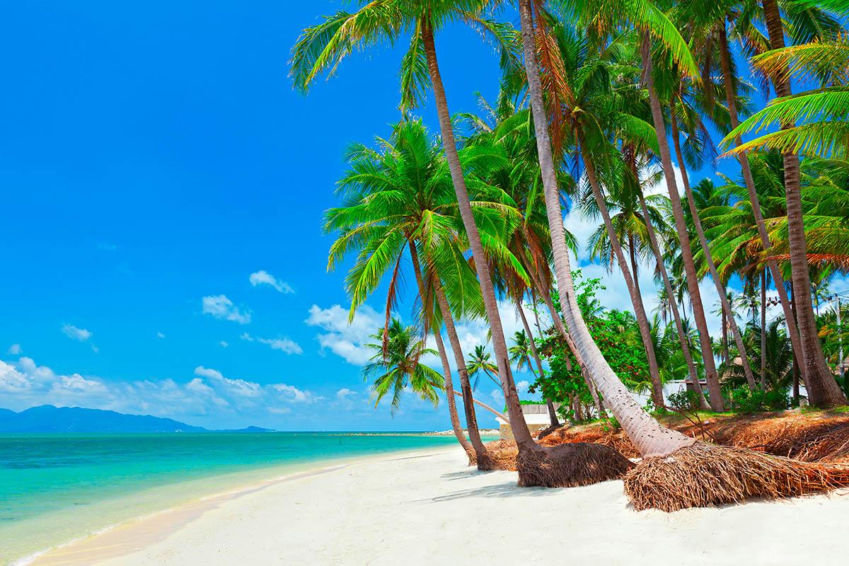 thaimaa samui palmuranta