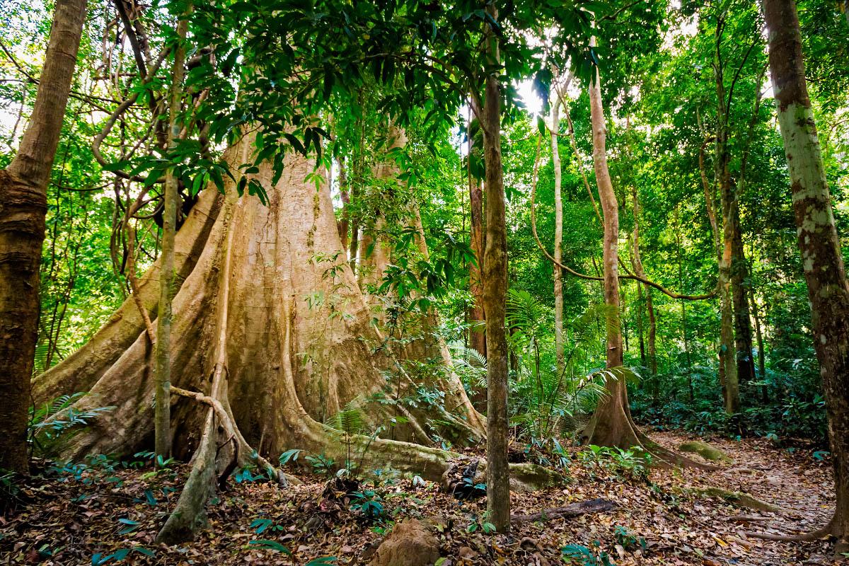 thaimaa sademetsä
