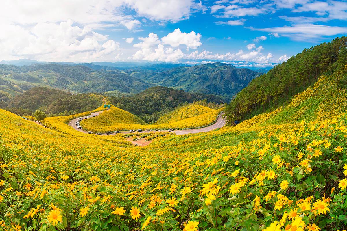 thaimaa Tung Bua Tong auringonkukka pelto